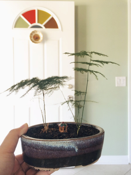 Tiniest bonsai