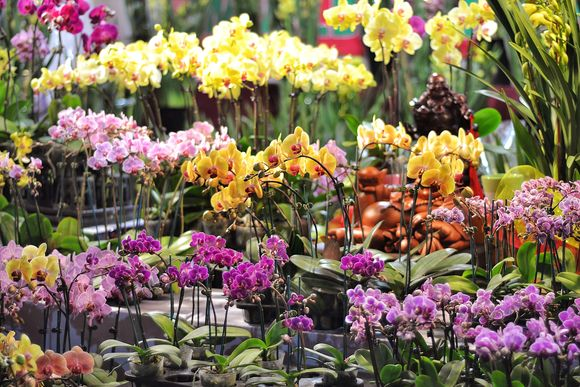 Orchid stall chinese new year